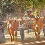 Cambodge_28